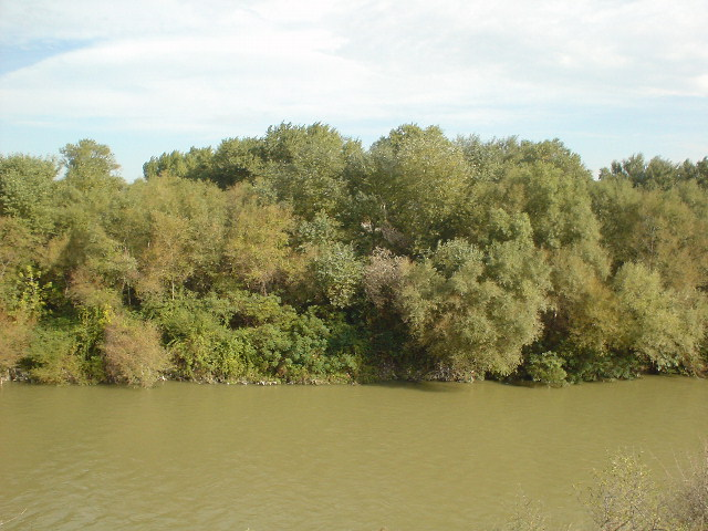 Mtkvari floodplain forest